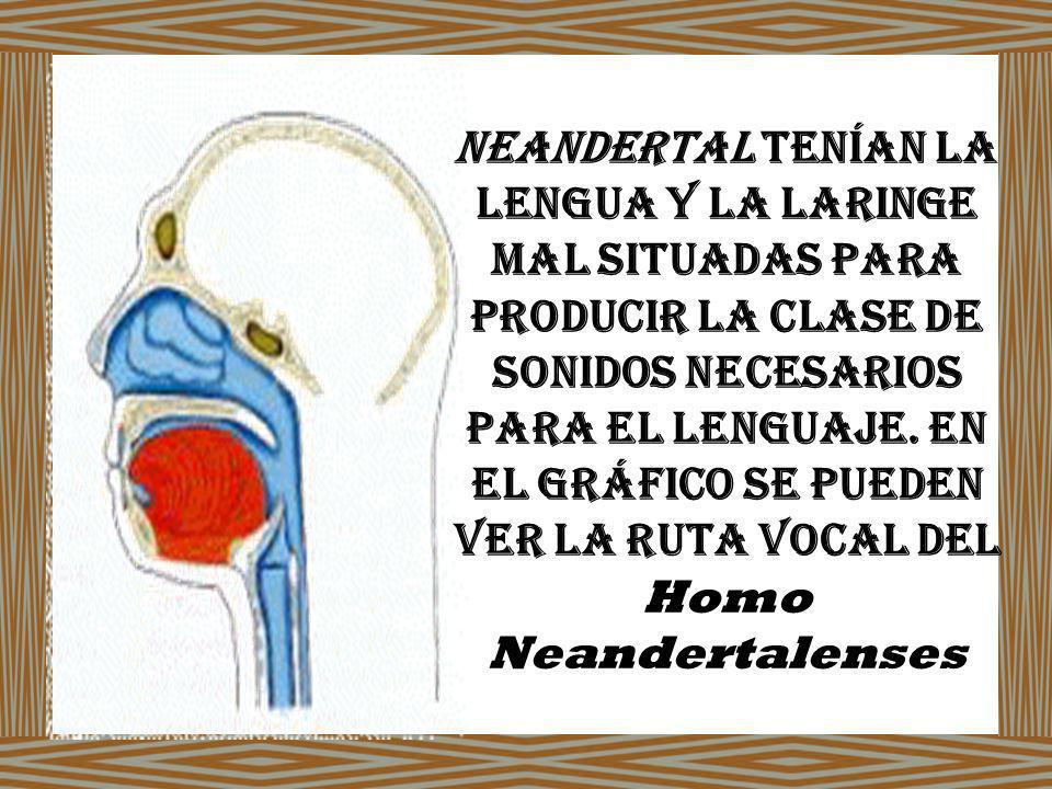 Neandertal tenían la lengua y la laringe mal situadas para producir la clase de sonidos necesarios para el lenguaje.
