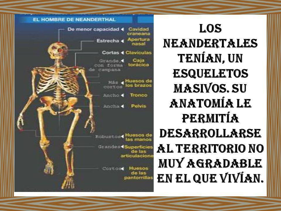 Los neandertales tenían, un esqueletos masivos