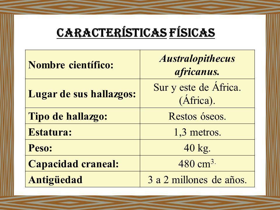 Características físicas Australopithecus africanus.