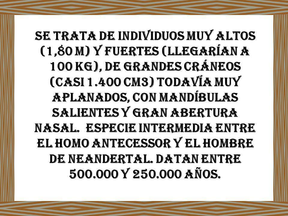Se trata de individuos muy altos (1,80 m) y fuertes (llegarían a 100 kg), de grandes cráneos (casi 1.400 cm3) todavía muy aplanados, con mandíbulas salientes y gran abertura nasal. Especie intermedia entre el Homo antecessor y el hombre de Neandertal.