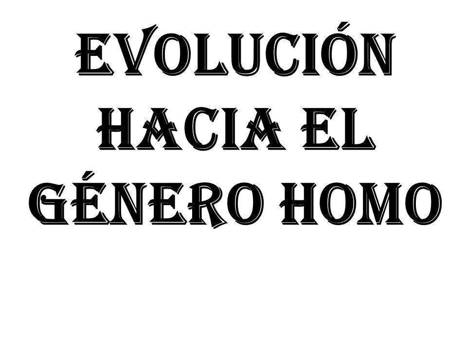 EVOLUCIÓN HACIA EL GÉNERO HOMO