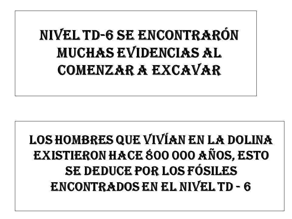 NIVEL TD-6 SE ENCONTRARÓN MUCHAS EVIDENCIAS AL COMENZAR A EXCAVAR