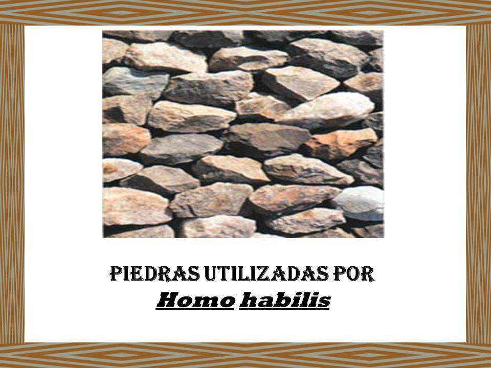 Piedras utilizadas por Homo habilis