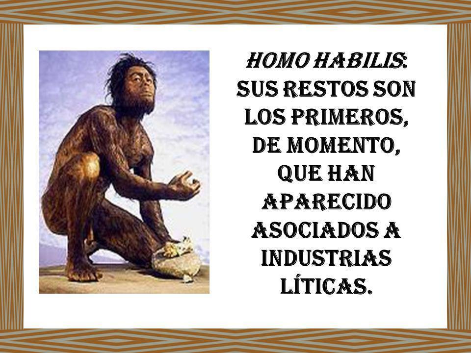 Homo Habilis: sus restos son los primeros, de momento, que han aparecido asociados a industrias líticas.