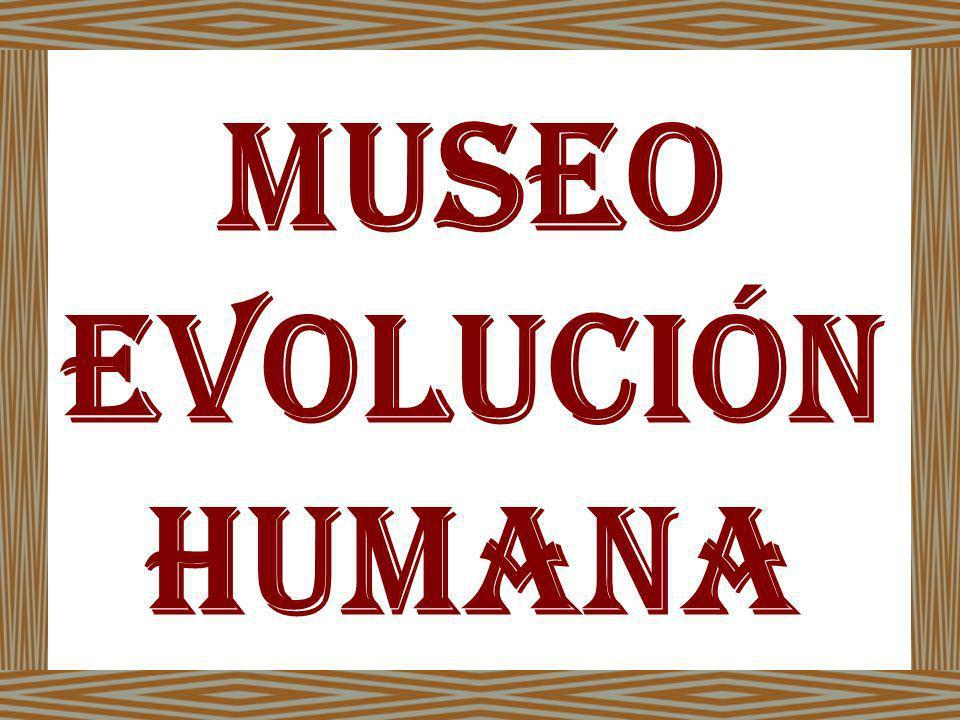 Museo Evolución humana