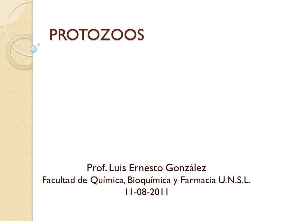 PROTOZOOS Prof. Luis Ernesto González