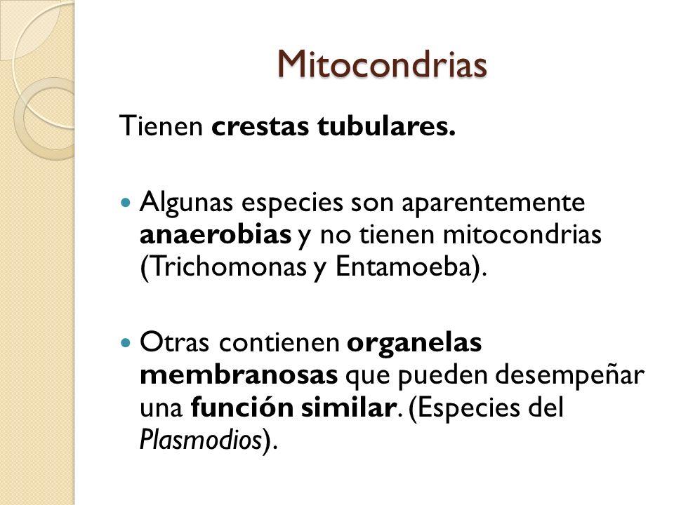 Mitocondrias Tienen crestas tubulares.