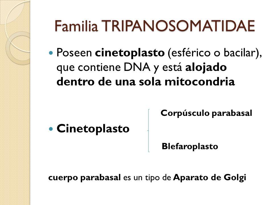 Familia TRIPANOSOMATIDAE