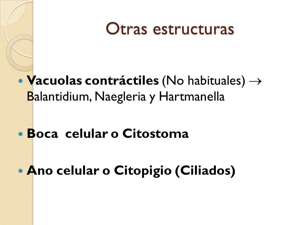 Otras estructuras Vacuolas contráctiles (No habituales)  Balantidium, Naegleria y Hartmanella. Boca celular o Citostoma.