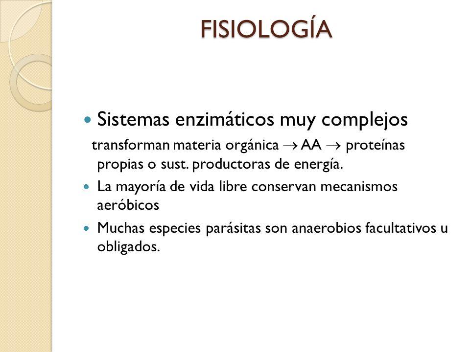 FISIOLOGÍA Sistemas enzimáticos muy complejos