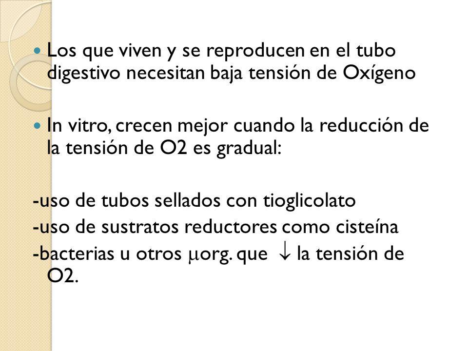 Los que viven y se reproducen en el tubo digestivo necesitan baja tensión de Oxígeno
