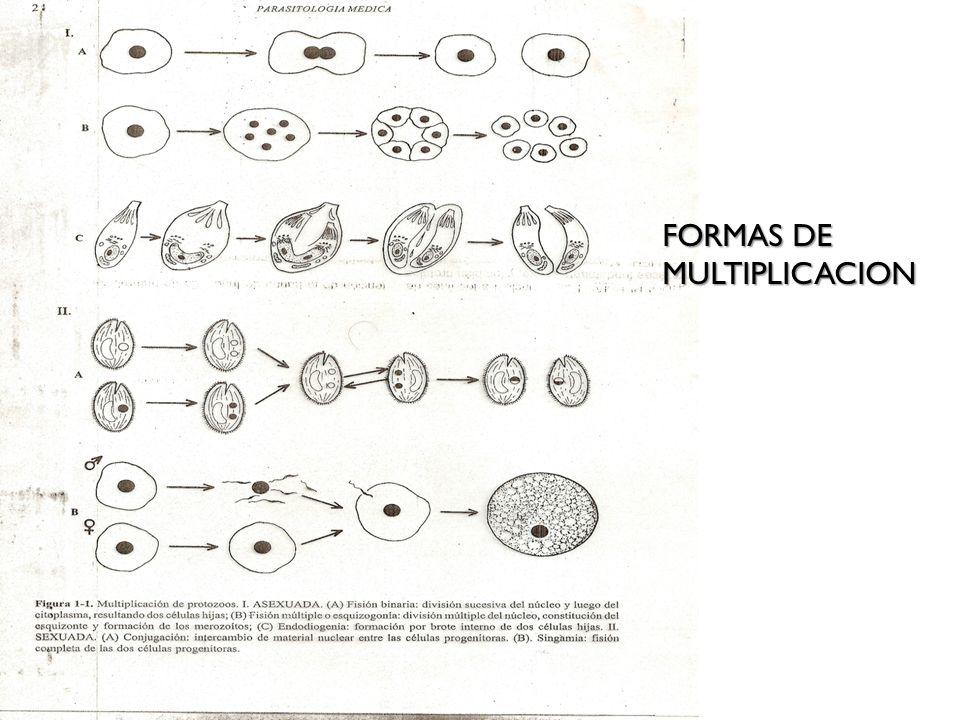 FORMAS DE MULTIPLICACION