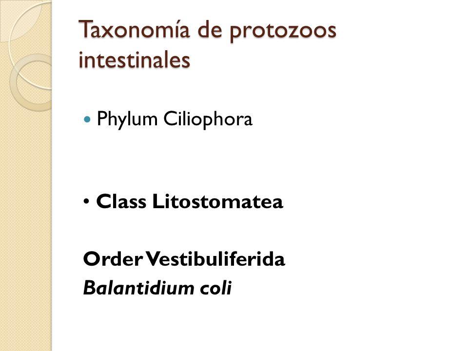 Taxonomía de protozoos intestinales