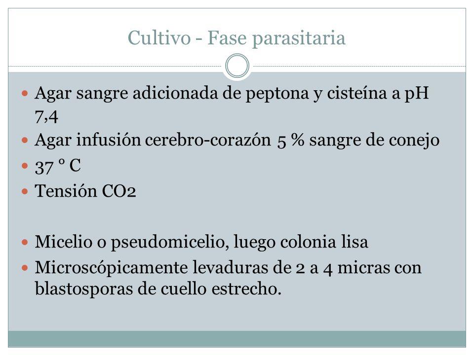 Cultivo - Fase parasitaria