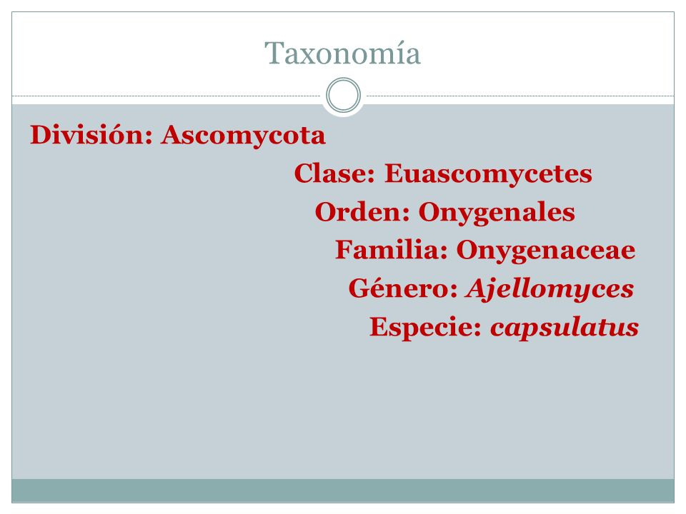 Taxonomía División: Ascomycota Clase: Euascomycetes Orden: Onygenales