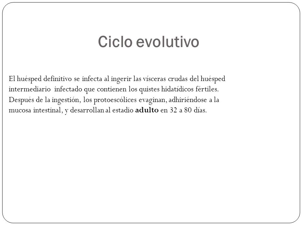 Ciclo evolutivo