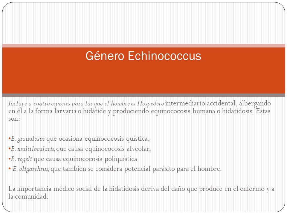 Género Echinococcus