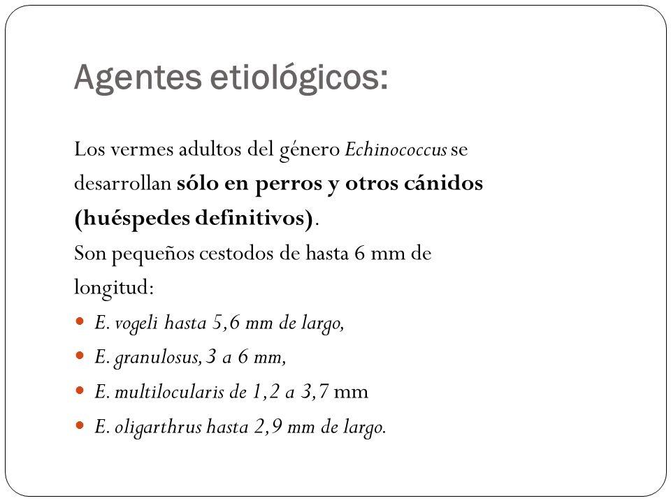 Agentes etiológicos: Los vermes adultos del género Echinococcus se