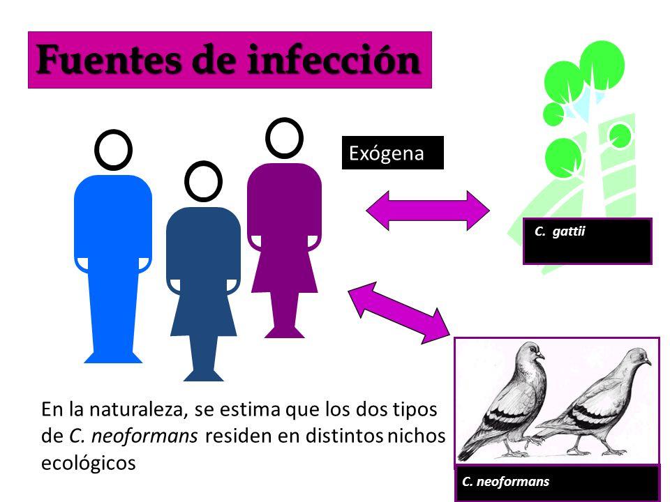 Fuentes de infección Exógena