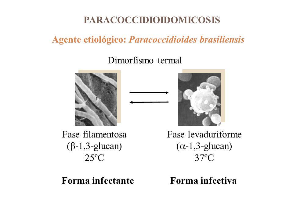 PARACOCCIDIOIDOMICOSIS