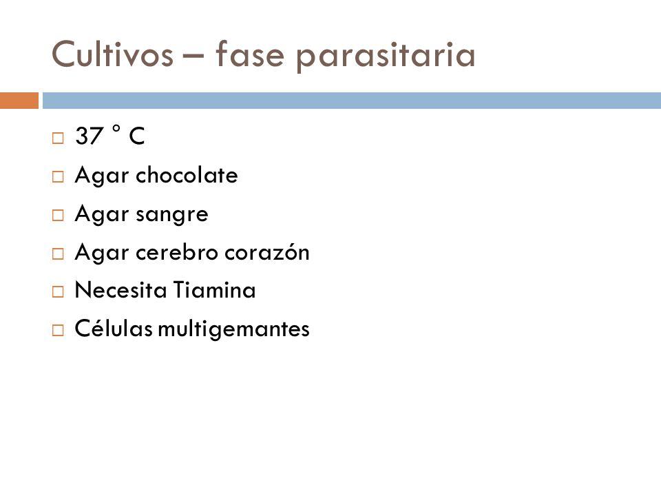 Cultivos – fase parasitaria