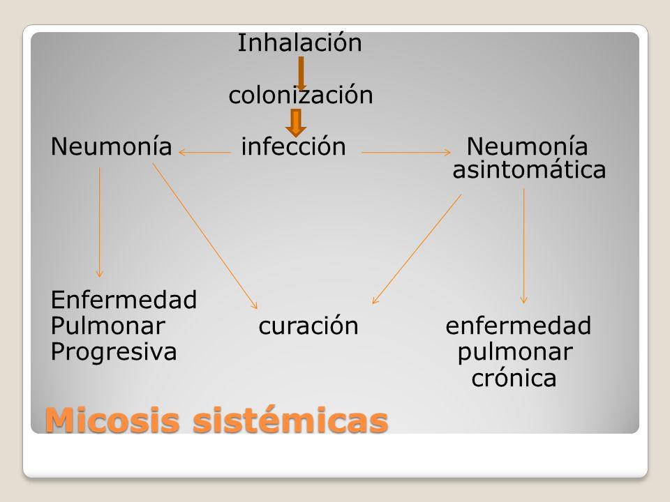 Inhalación colonización Neumonía infección Neumonía asintomática Enfermedad Pulmonar curación enfermedad Progresiva pulmonar crónica