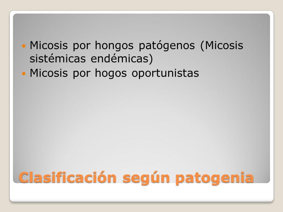 Clasificación según patogenia