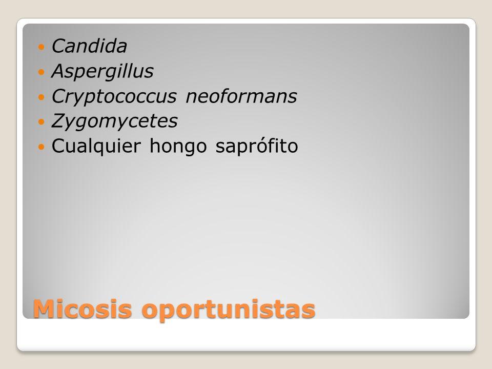 Micosis oportunistas Candida Aspergillus Cryptococcus neoformans