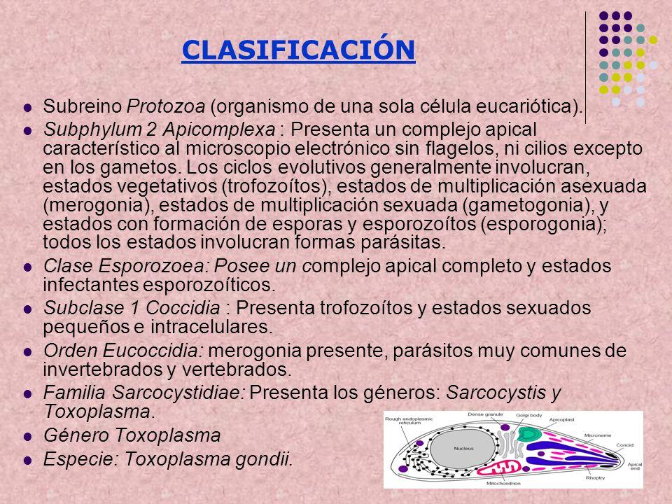 CLASIFICACIÓNSubreino Protozoa (organismo de una sola célula eucariótica).