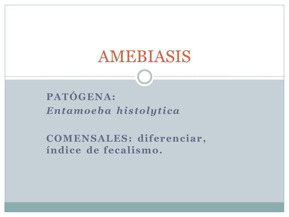 AMEBIASIS Patógena: Entamoeba histolytica