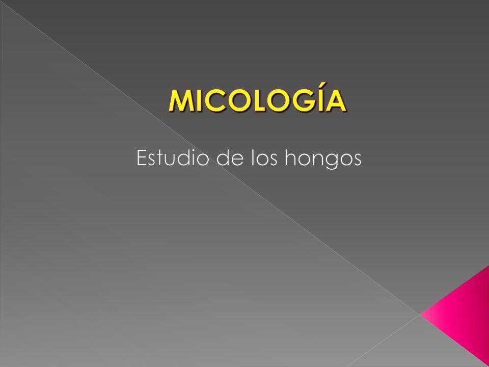 MICOLOGÍA Estudio de los hongos