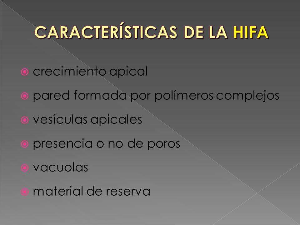 CARACTERÍSTICAS DE LA HIFA