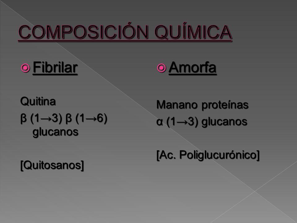 COMPOSICIÓN QUÍMICA Fibrilar Amorfa Quitina Manano proteínas