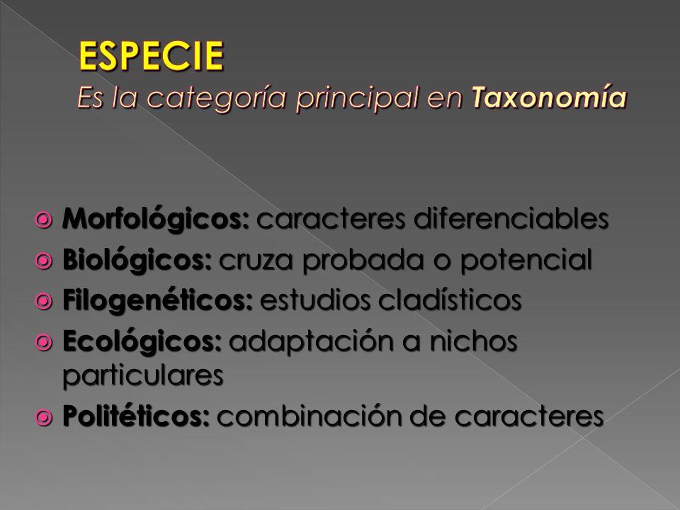 ESPECIE Es la categoría principal en Taxonomía