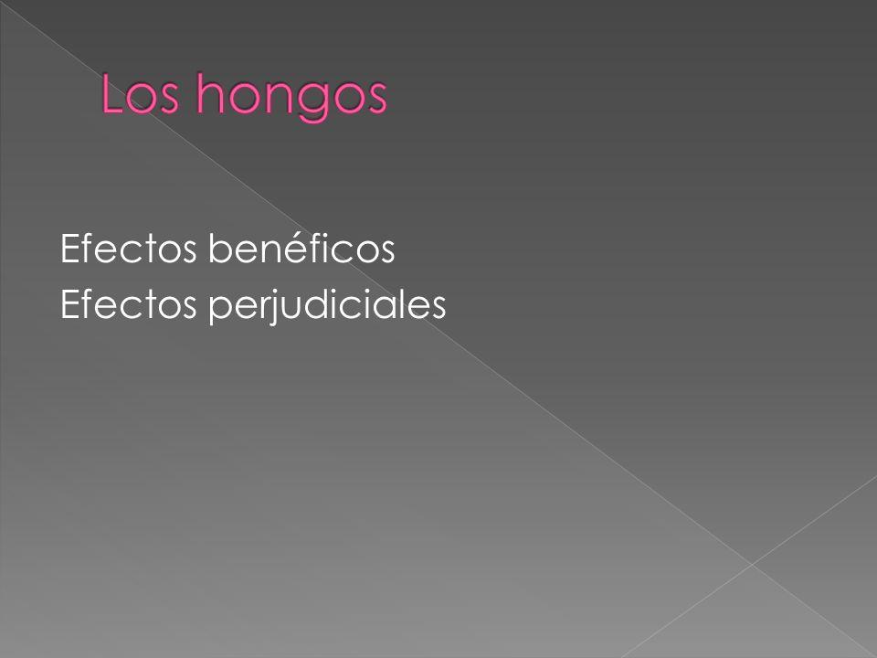 Los hongos Efectos benéficos Efectos perjudiciales