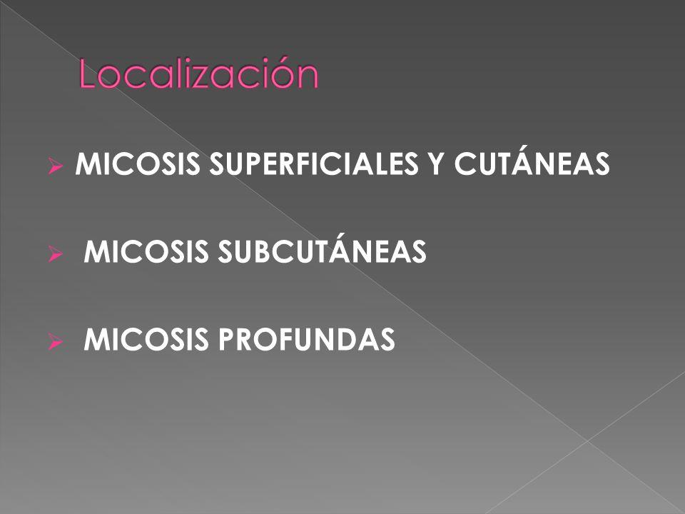 Localización MICOSIS SUPERFICIALES Y CUTÁNEAS MICOSIS SUBCUTÁNEAS