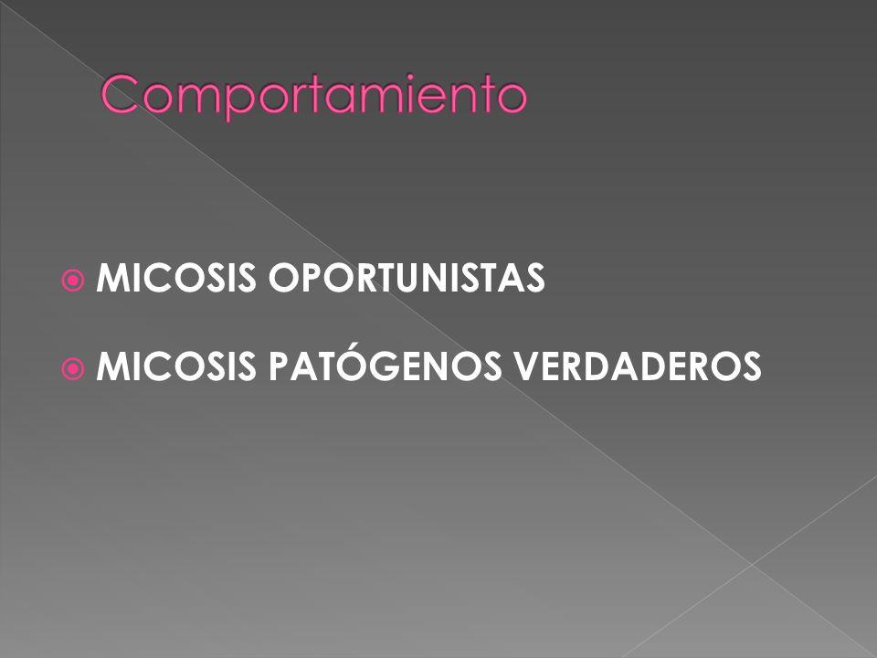 Comportamiento MICOSIS OPORTUNISTAS MICOSIS PATÓGENOS VERDADEROS