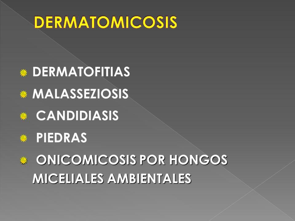 DERMATOMICOSIS DERMATOFITIAS MALASSEZIOSIS CANDIDIASIS PIEDRAS