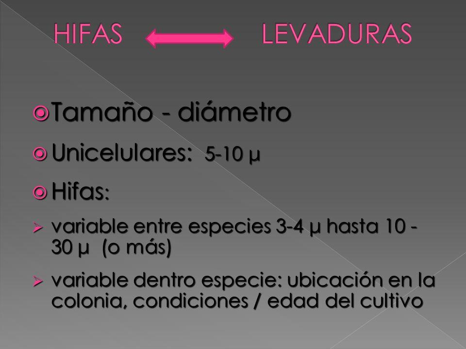 HIFAS LEVADURAS Tamaño - diámetro Unicelulares: 5-10 μ Hifas: