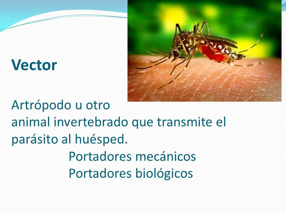 Vector Artrópodo u otro animal invertebrado que transmite el parásito al huésped.