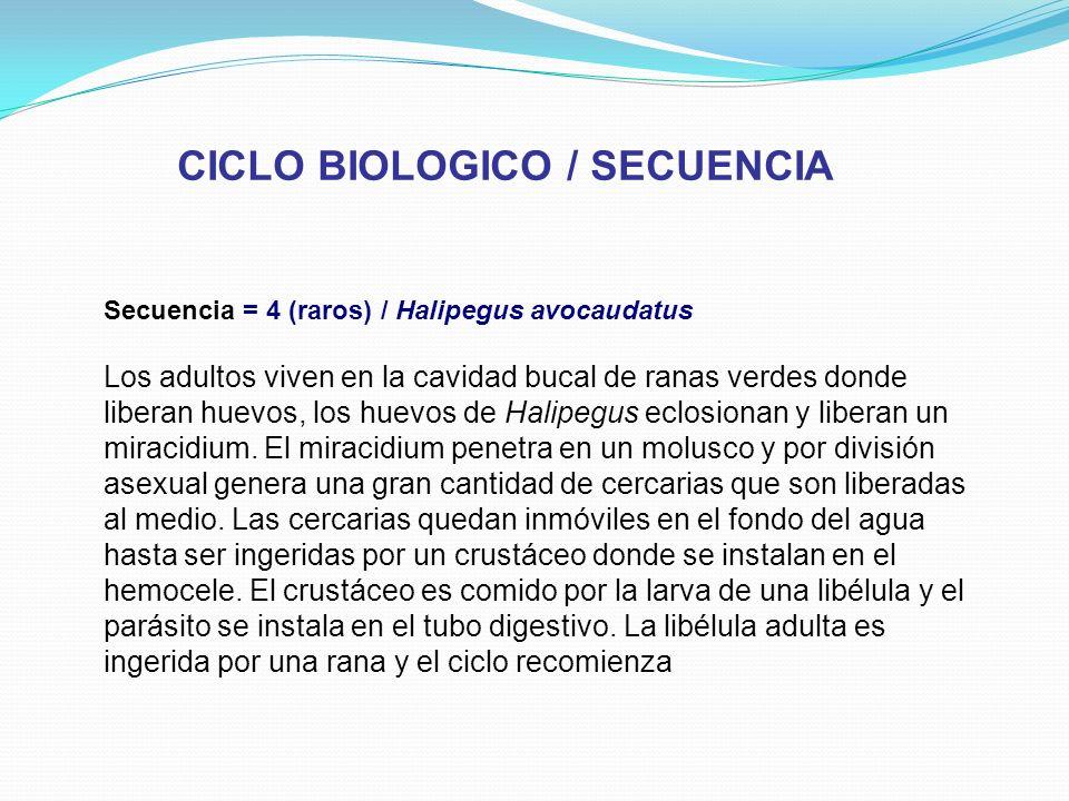 CICLO BIOLOGICO / SECUENCIA