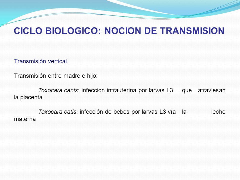 CICLO BIOLOGICO: NOCION DE TRANSMISION