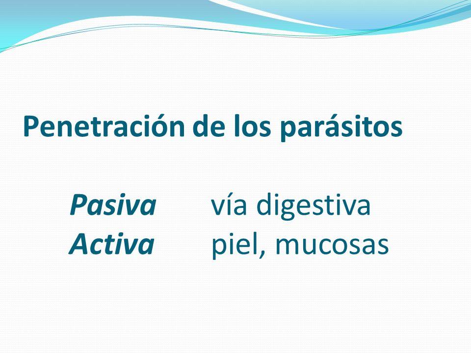 Penetración de los parásitos Pasiva vía digestiva Activa piel, mucosas