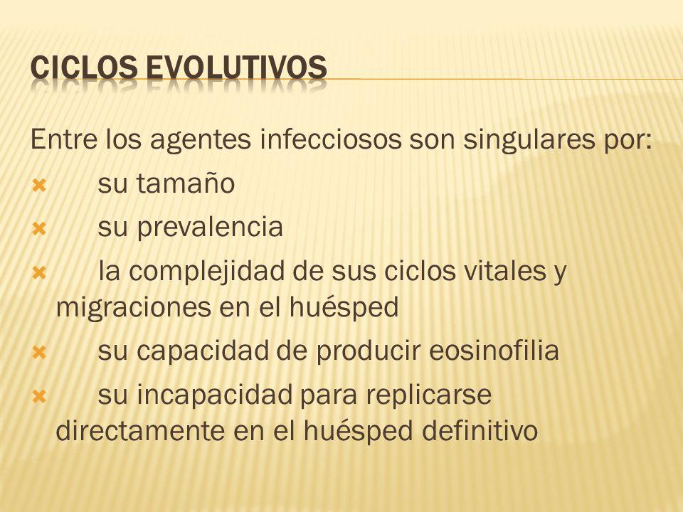 CICLOS EVOLUTIVOS Entre los agentes infecciosos son singulares por: