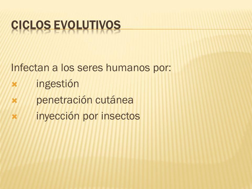 CICLOS EVOLUTIVOS Infectan a los seres humanos por: ingestión