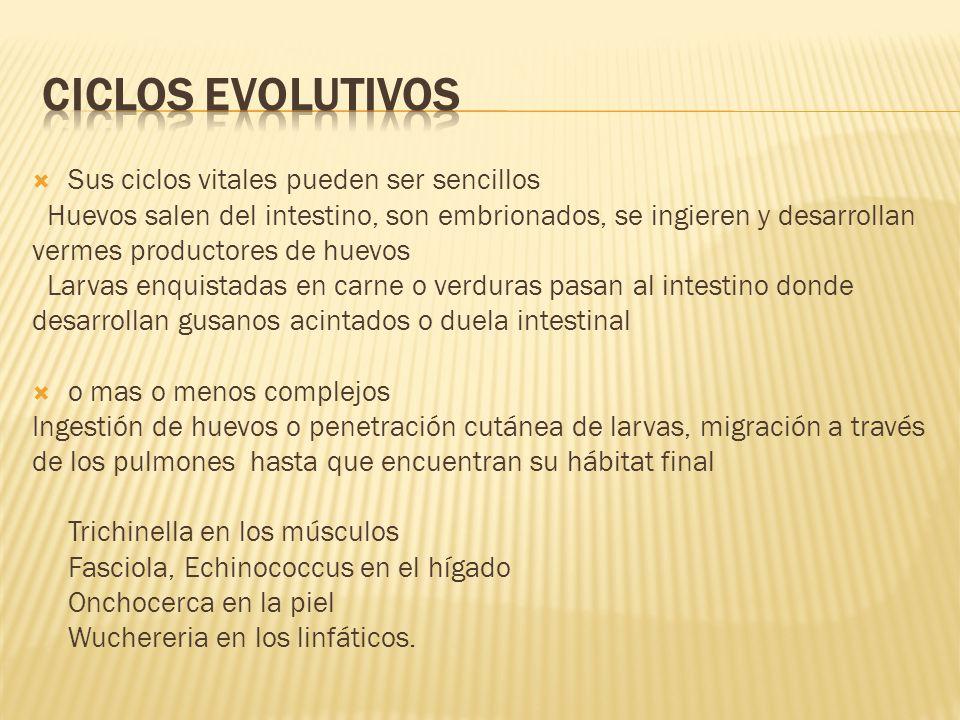 CICLOS EVOLUTIVOS Sus ciclos vitales pueden ser sencillos