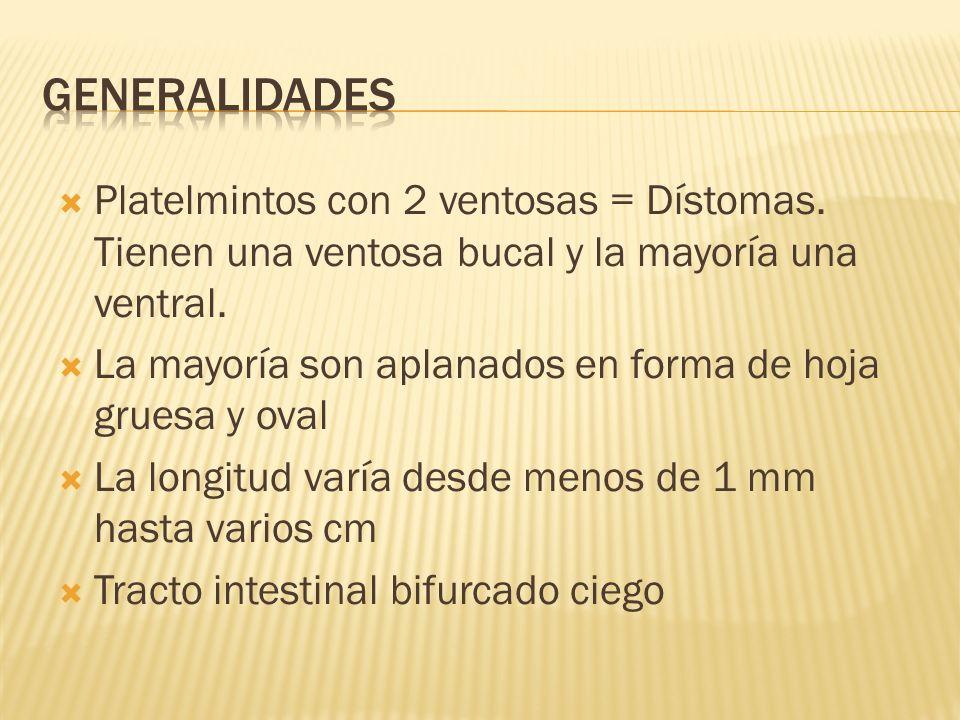 Generalidades Platelmintos con 2 ventosas = Dístomas. Tienen una ventosa bucal y la mayoría una ventral.