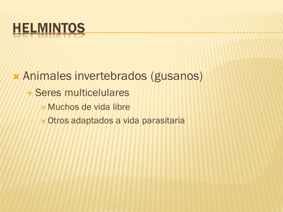 HELMINTOS Animales invertebrados (gusanos) Seres multicelulares