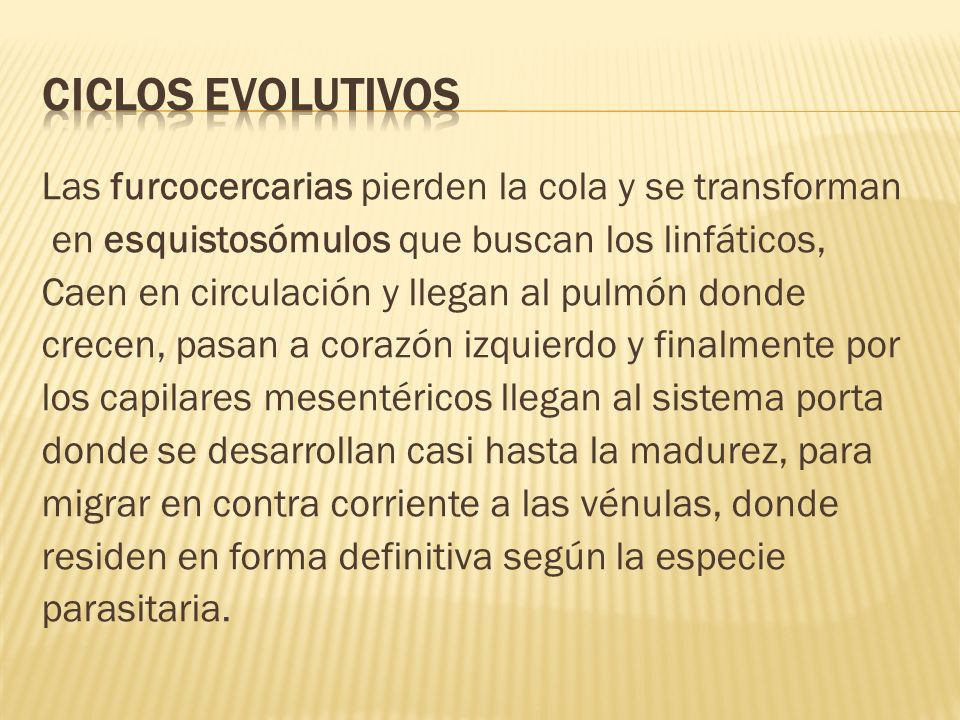 Ciclos evolutivos