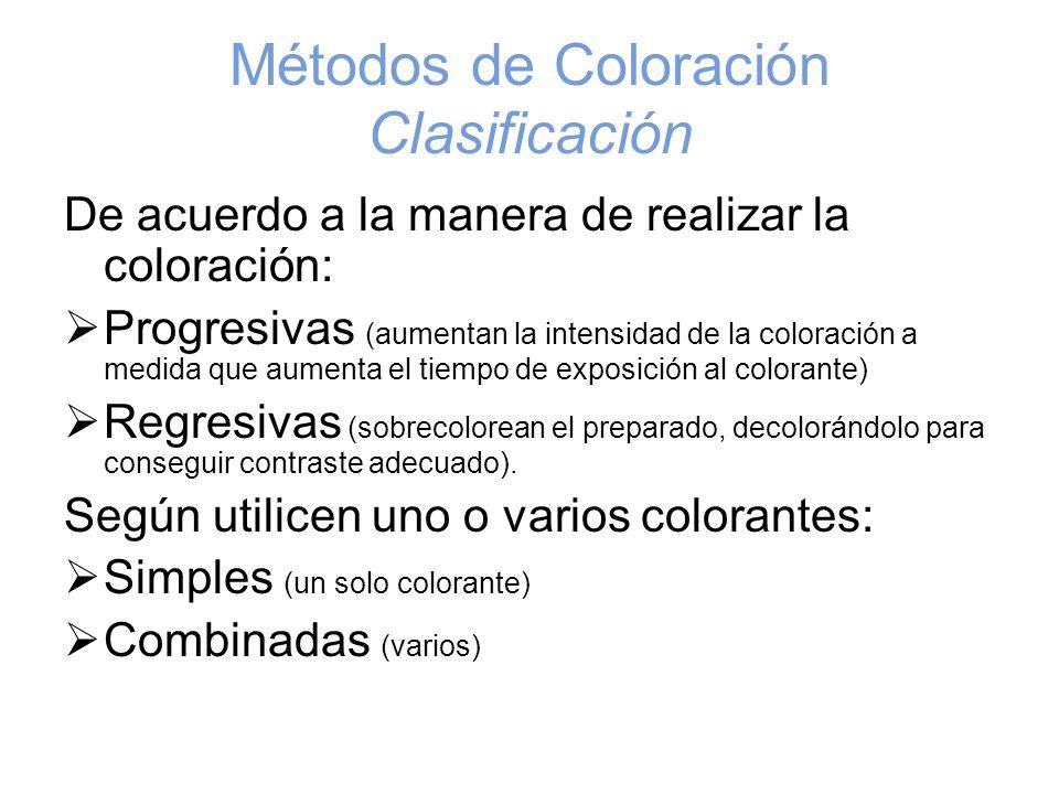 Métodos de Coloración Clasificación